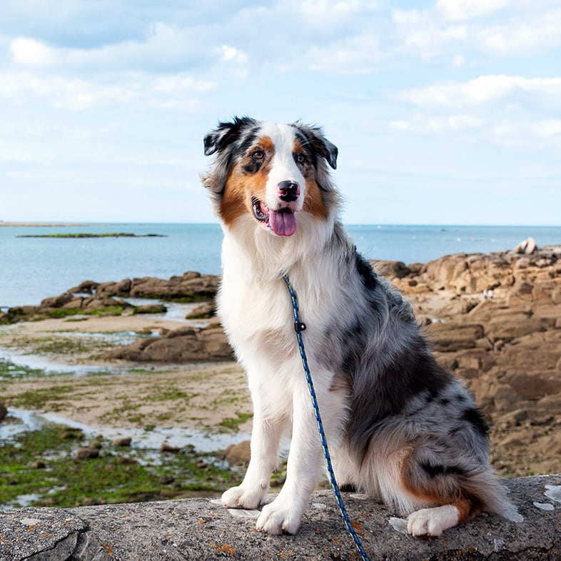 Dog Sitting on a Rock by Water | Taste of the Wild