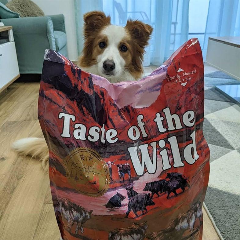 Dog Sitting Behind Taste of the Wild Food Bag | Taste of the Wild