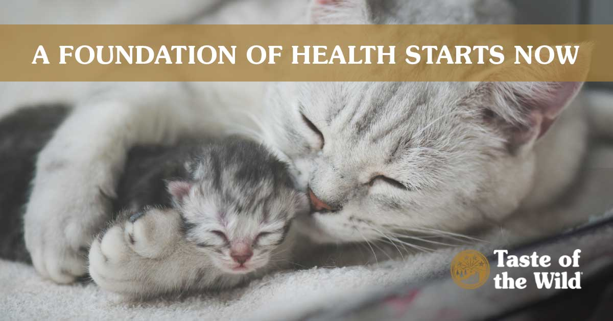 Cat Holding Kitten | Taste of the Wild