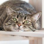 Cat Sitting on Furniture | Taste of the Wild