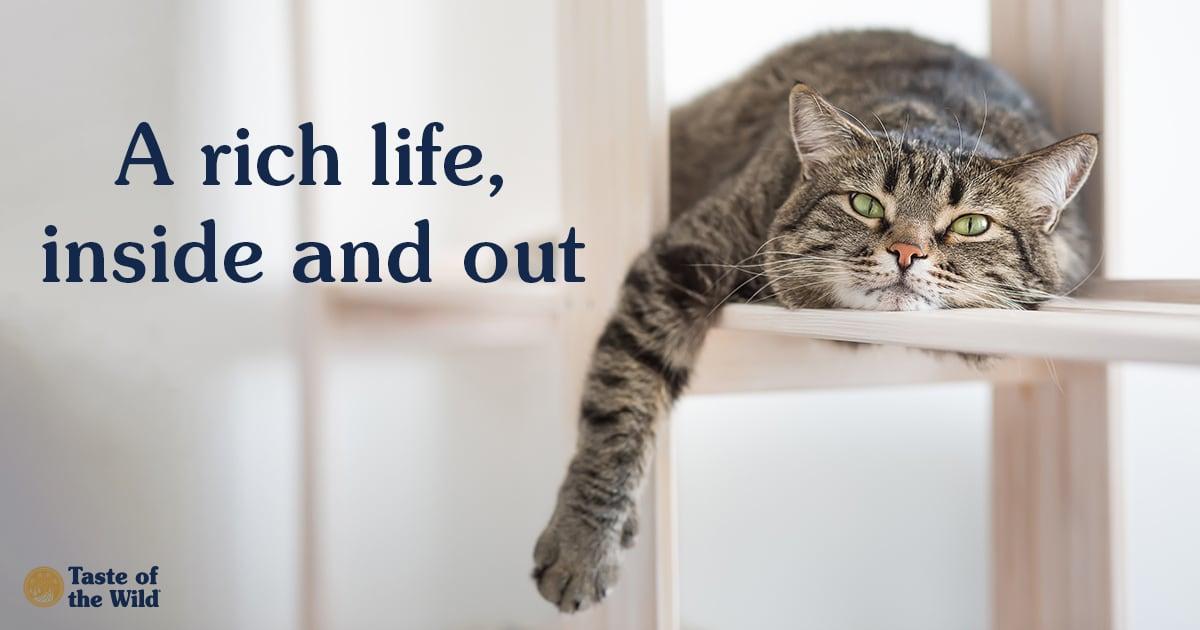 Cat Sitting on Furniture   Taste of the Wild