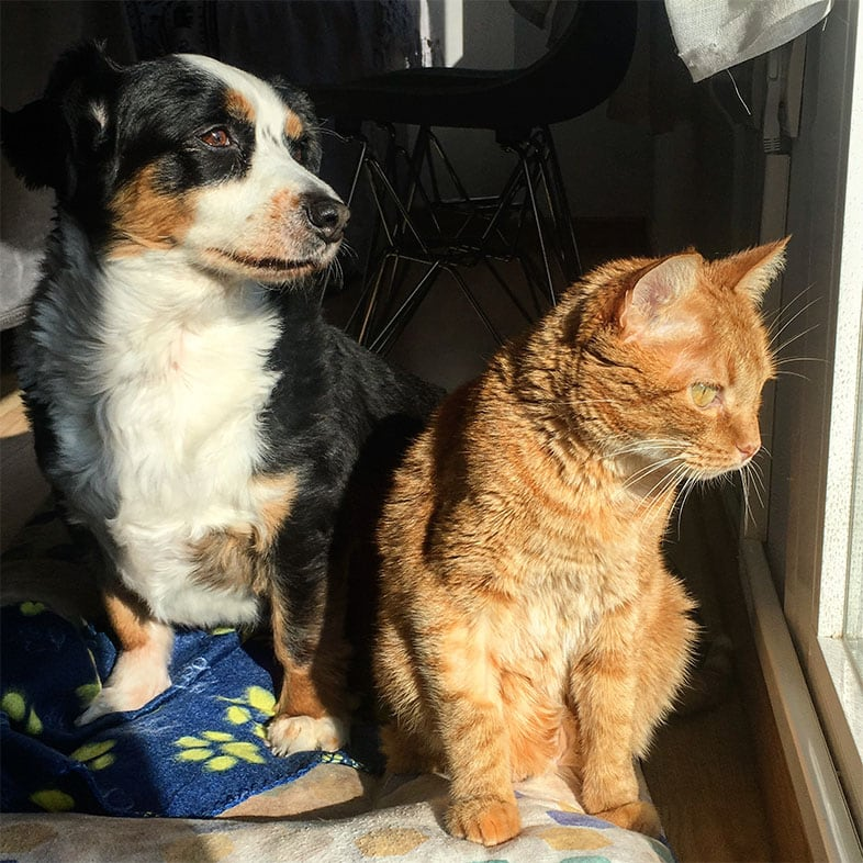 Dog and Cat Sitting Looking Out a Window | Taste of the Wild