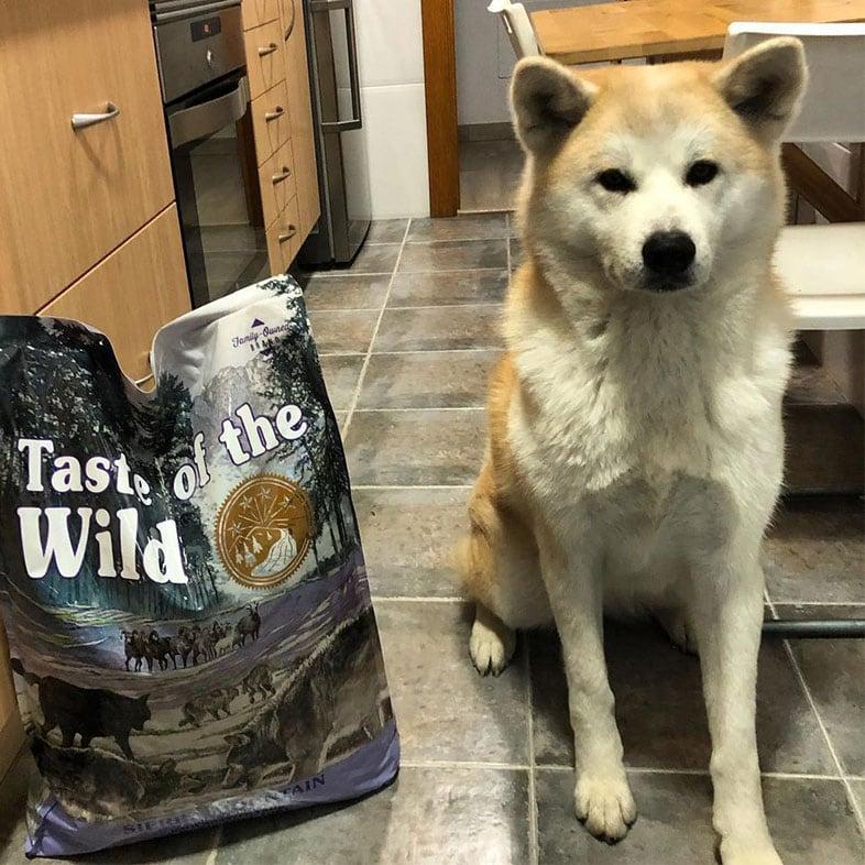 Dog Sitting Next to Taste of the Wild Food Bag | Taste of the Wild