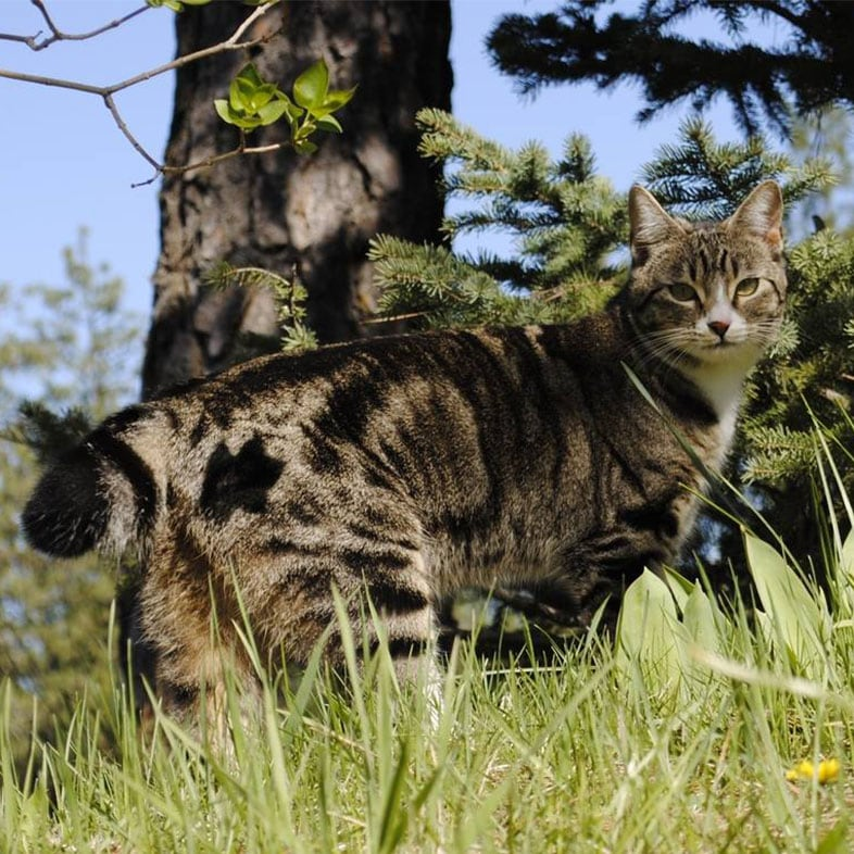Cat on Grass Next to a Tree | Taste of the Wild