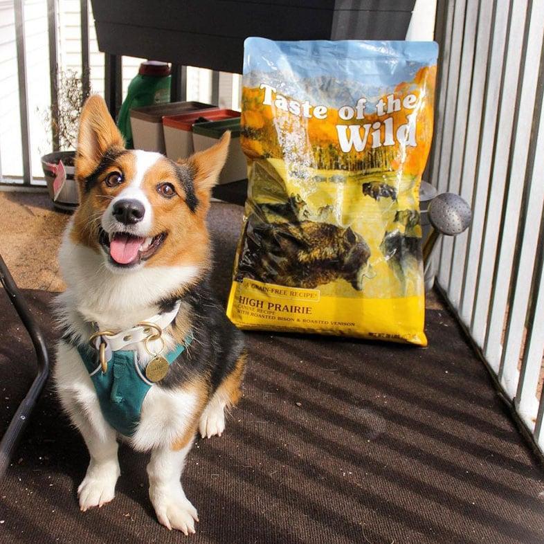Corgi Dog Sitting Next to Taste of the Wild Food Bag | Taste of the Wild