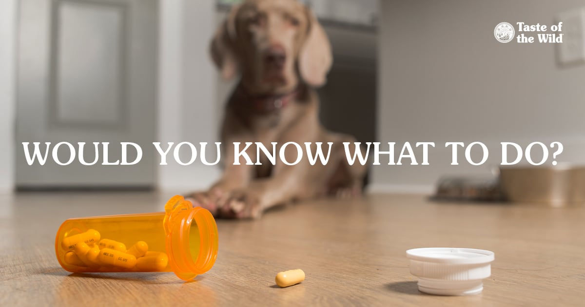 Open Prescription Bottle and Capsules Spilled on the Floor with Dog in the Background | Taste of the Wild