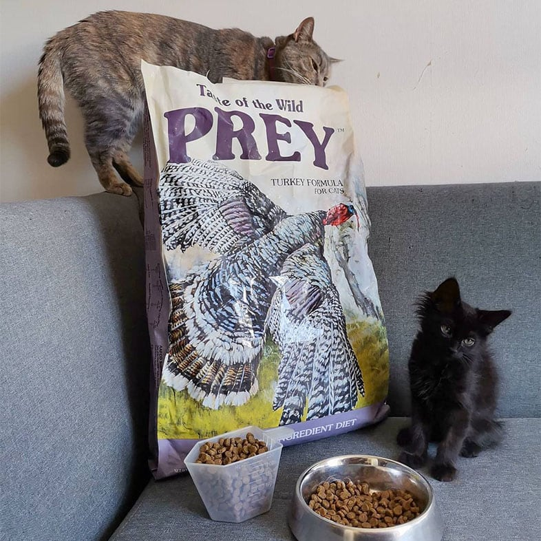 Two Cats with Taste of the Wild PREY Food Bag | Taste of the Wild