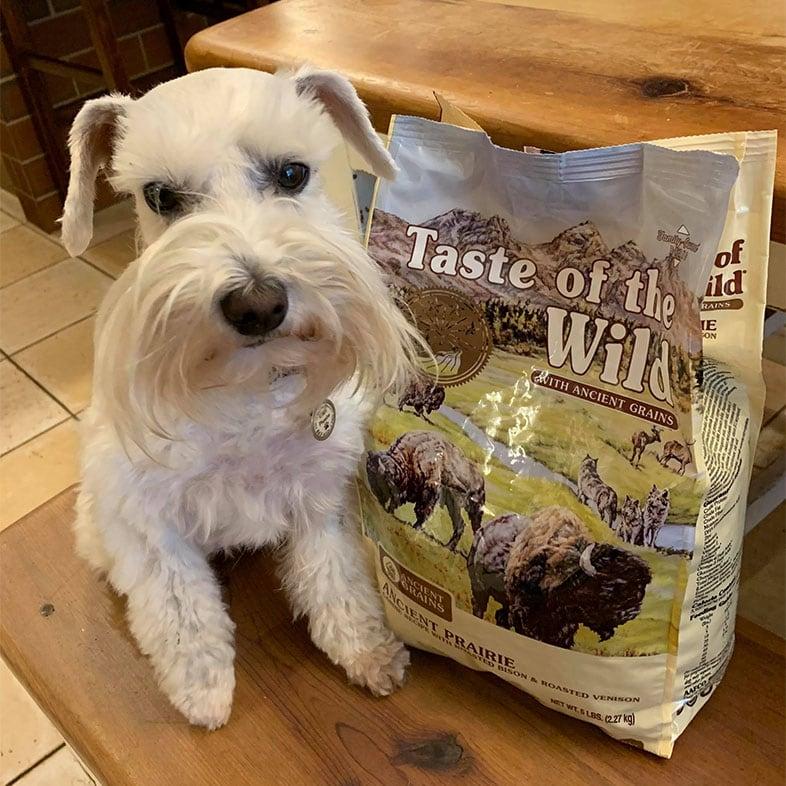 White Dog Sitting Next to Taste of the Wild Food Bag | Taste of the Wild