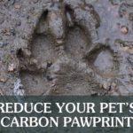 Paw Footprint in the Mud | Taste of the Wild