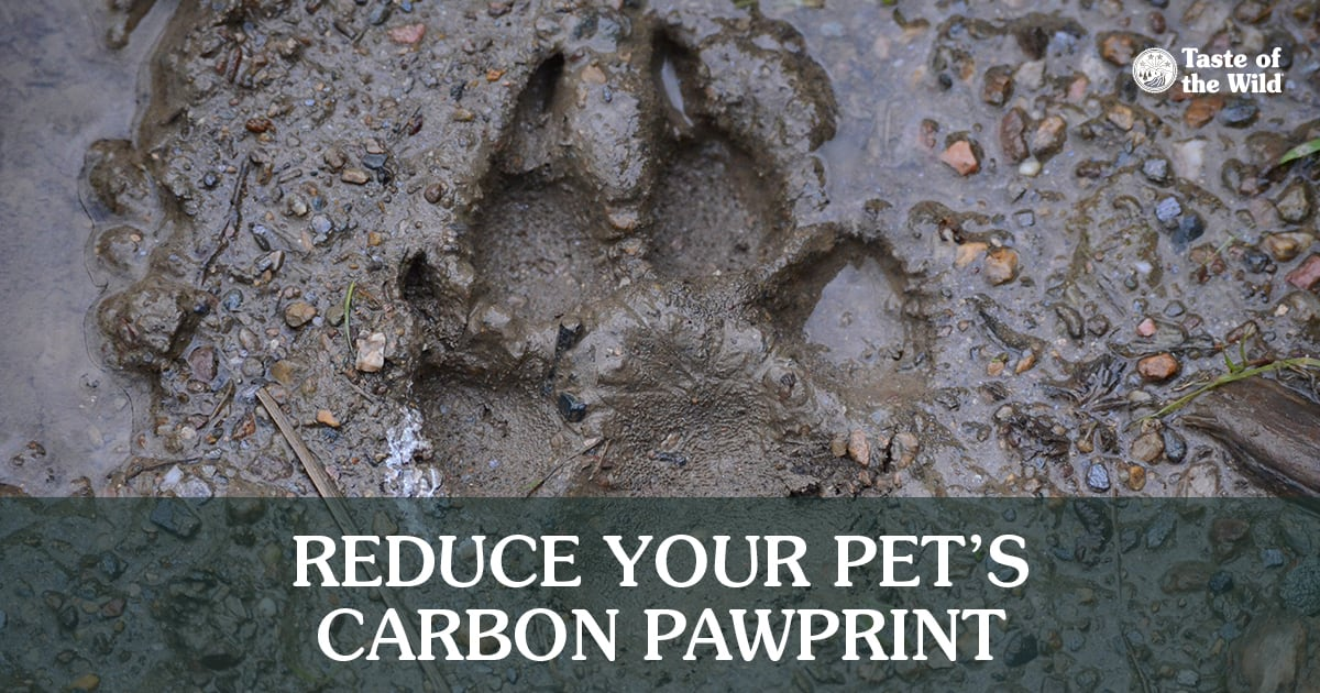 Paw Footprint in the Mud | Taste of the Wild