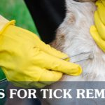 Tick Removal Process | Taste of the Wild