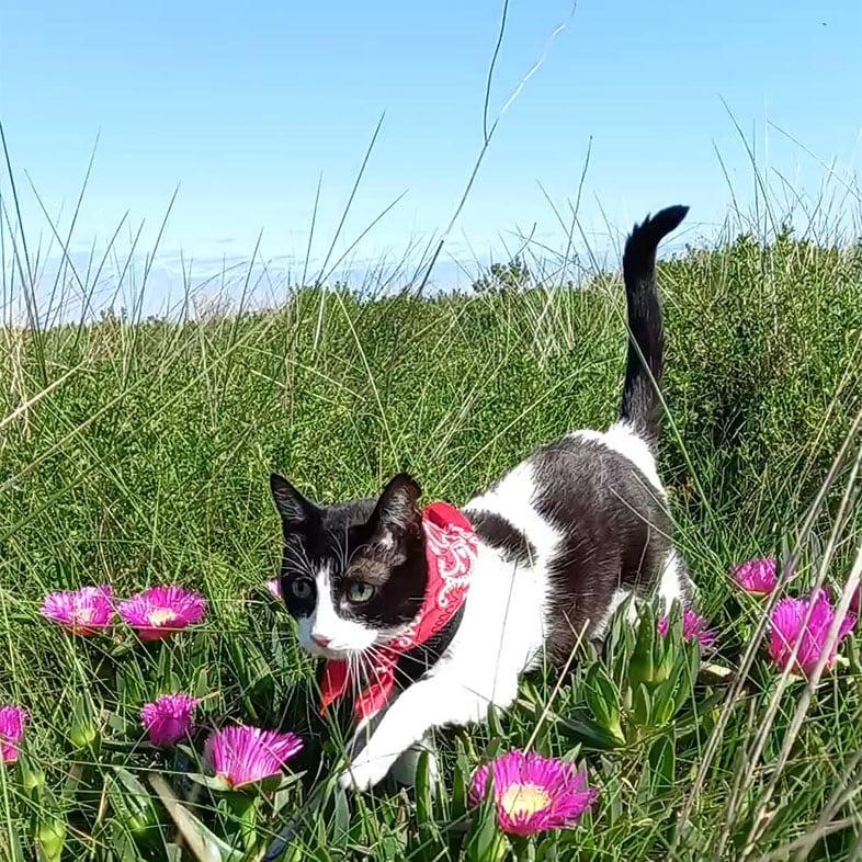 Common European Cat Walking in a Field | Taste of the Wild