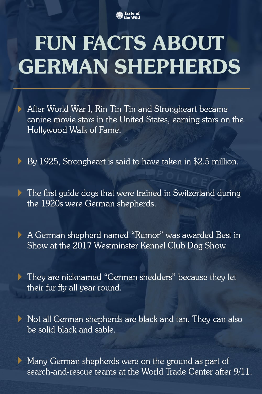 Fun Facts About German Shepherds List | Taste of the Wild