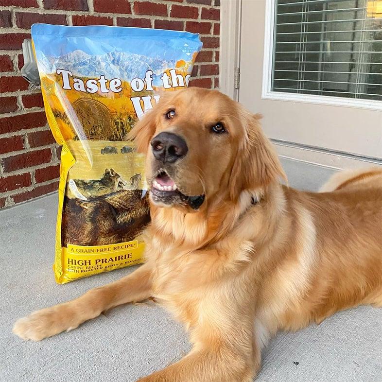 Golden Retriever Lying Next to Taste of the Wild Food Bag | Taste of the Wild
