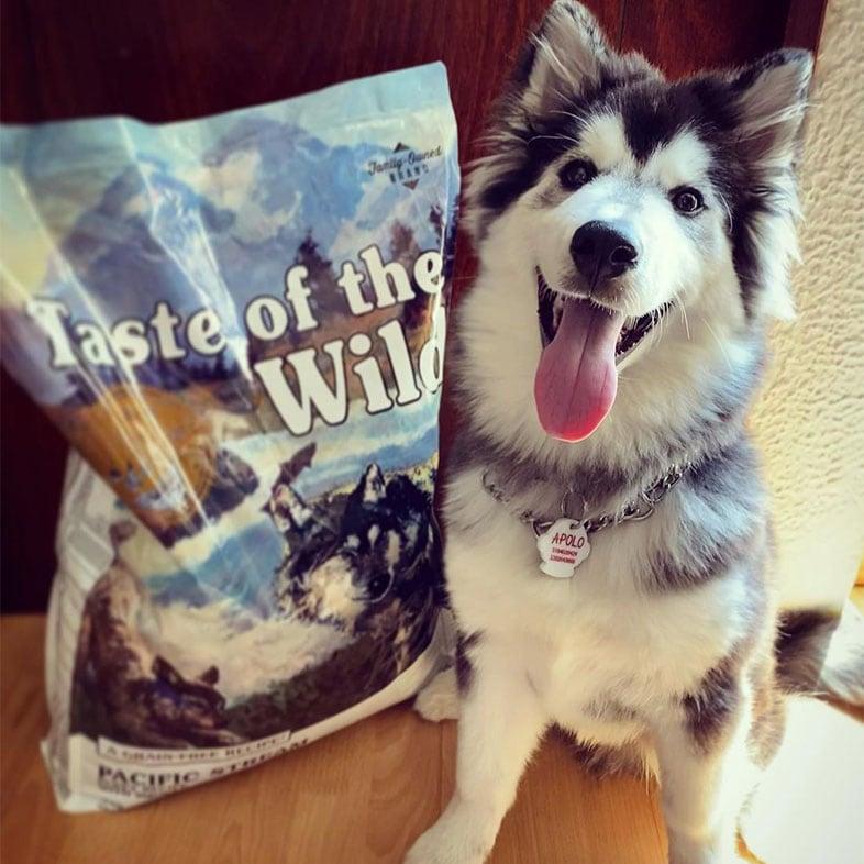 Husky Dog Sitting Next to Taste of the Wild Food Bag | Taste of the Wild