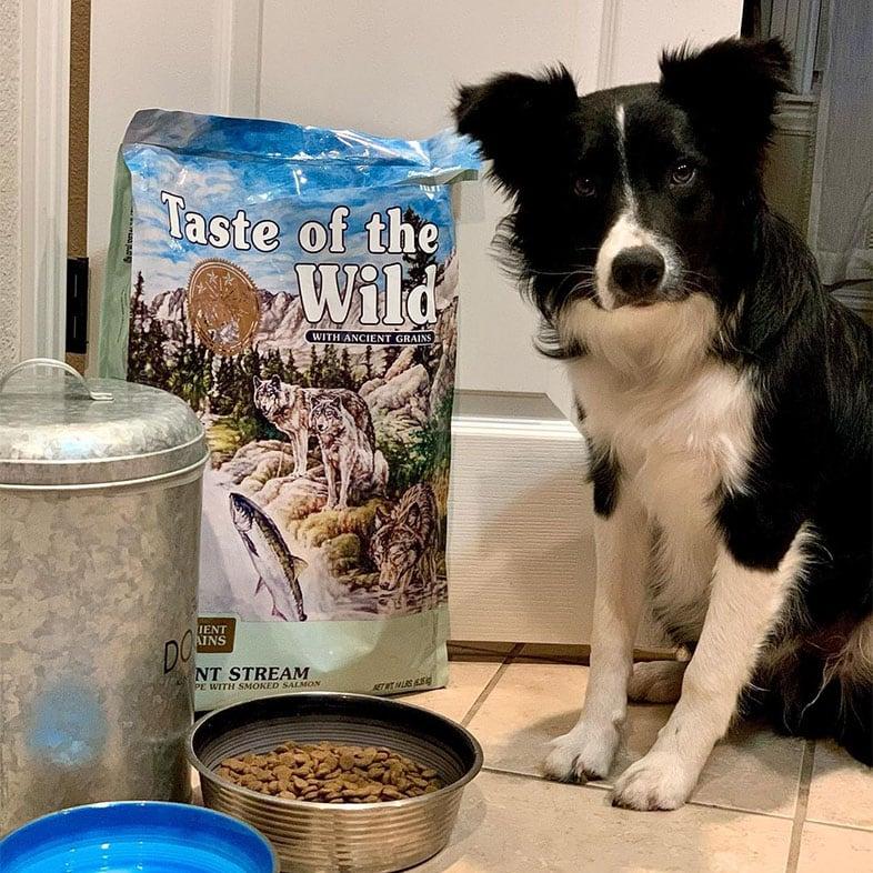 Border Collie Sitting Next to Taste of the Wild Food Bag | Taste of the Wild