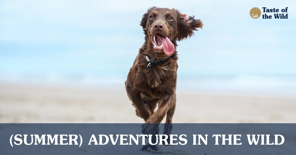 Brown Dog Running on Beach with Tongue Out | Taste of the Wild