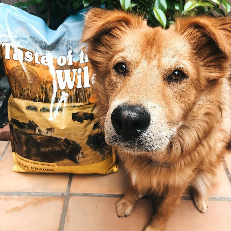 Dog Looking at Camera Next to Taste of the Wild Food Bag | Taste of the Wild