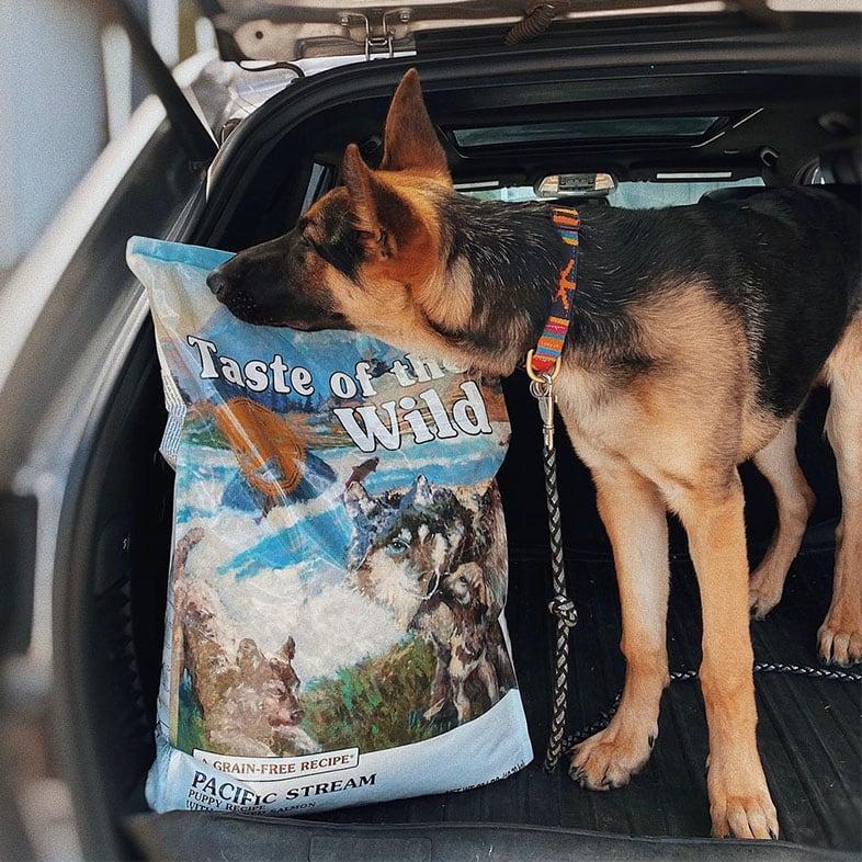 German Shepherd Dog Smelling Taste of the Wild Food Bag | Taste of the Wild