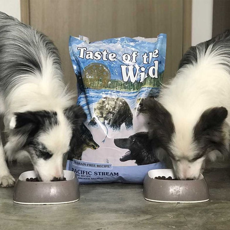 Two Dogs Eating Taste of the Wild Food | Taste of the Wild