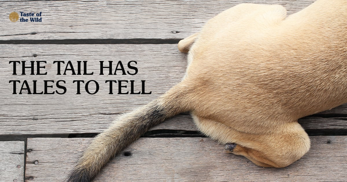 A Dog's Hindquarters and Tail | Taste of the Wild