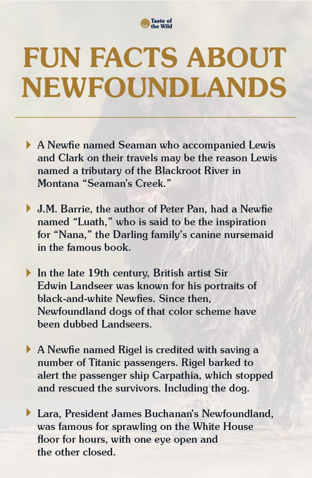 Fun Facts About Newfoundland Dogs Blog Graphic | Taste of the Wild