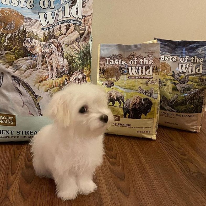 Maltese Puppy in Front of Taste of the Wild Food Bags | Taste of the Wild