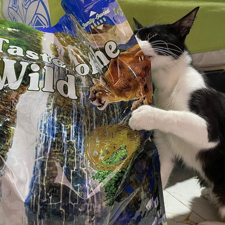 Cat Biting the Side of a Taste of the Wild Food Bag | Taste of the Wild