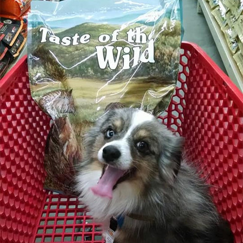 Dog in Shopping Cart with Taste of the Wild Food Bag | Taste of the Wild