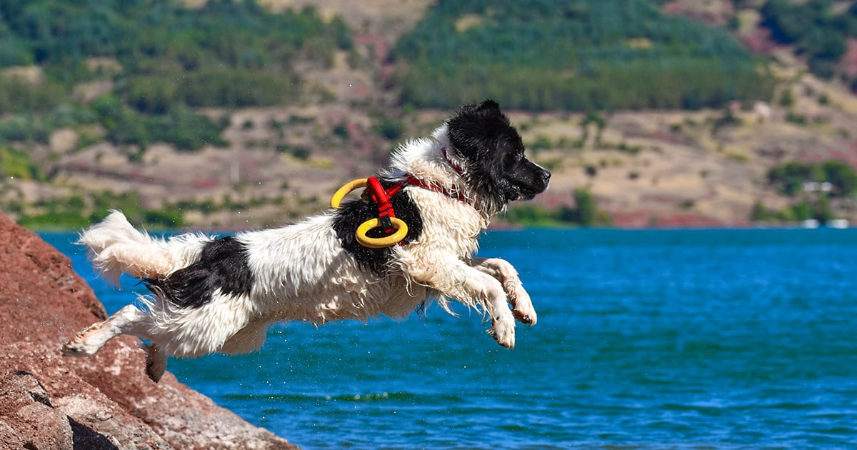 A Dog Jumping into Water | Taste of the Wild