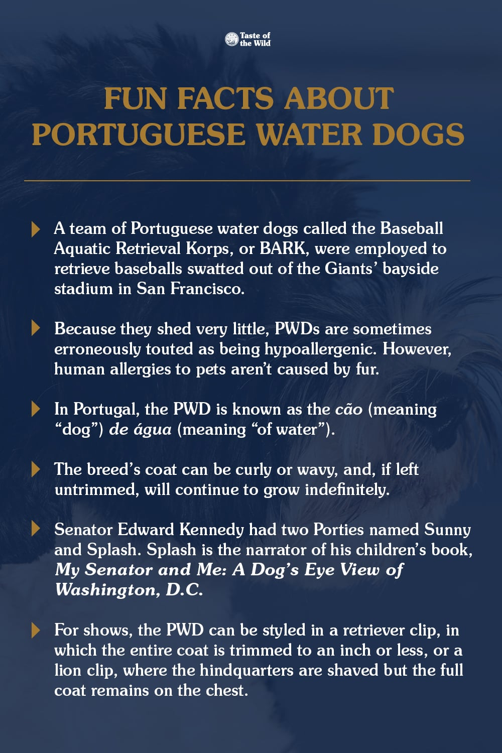 Fun Facts About Portuguese Water Dogs Graphic   Taste of the Wild