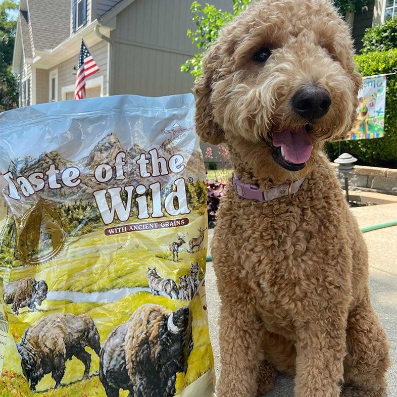 Goldendoodle Sitting Next to Taste of the Wild Food Bag | Taste of the Wild