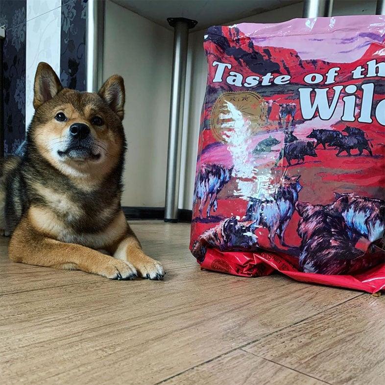 Shiba Inu Next to Taste of the Wild Food Bag | Taste of the Wild