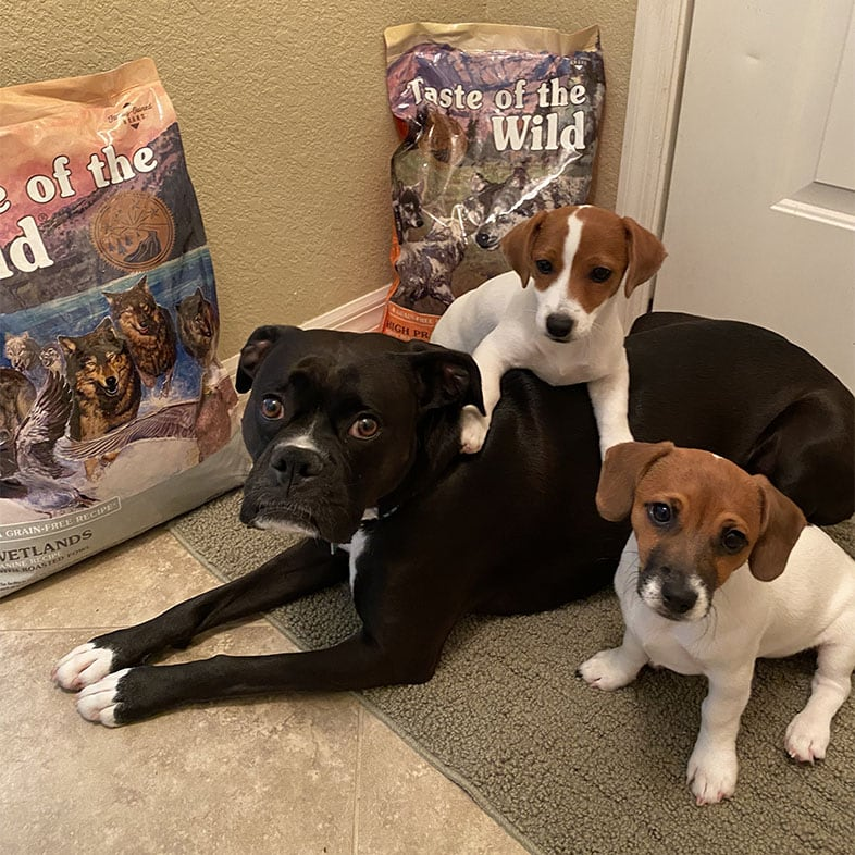 Three Dogs Lying Next to Taste of the Wild Food Bags | Taste of the Wild