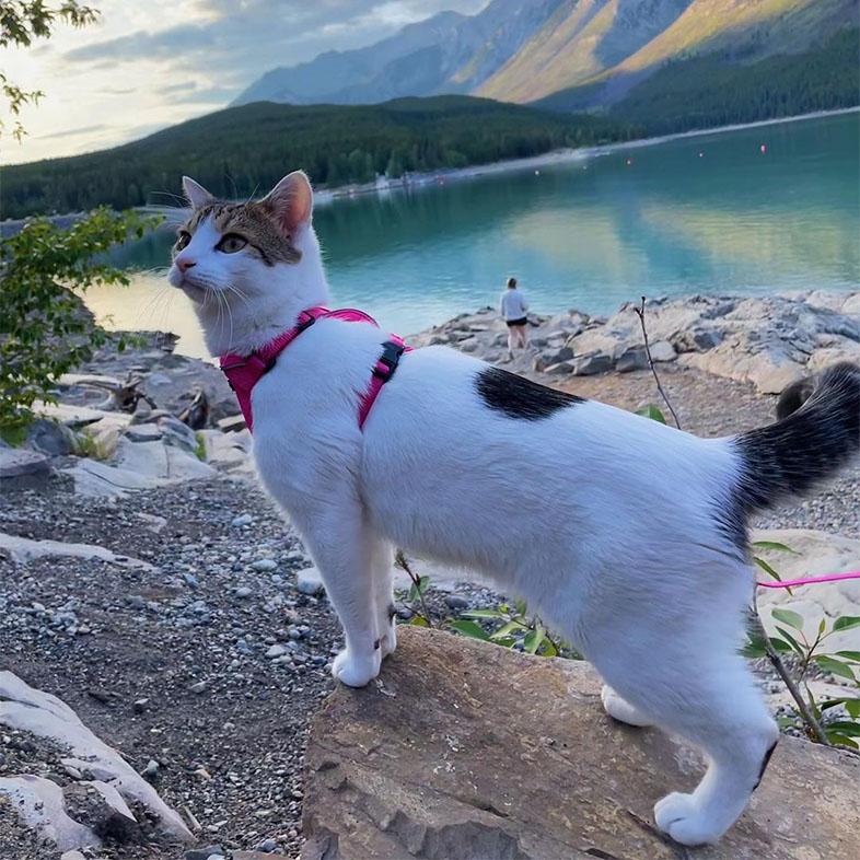 Cat Hiking at Lake Minnewanka | Taste of the Wild