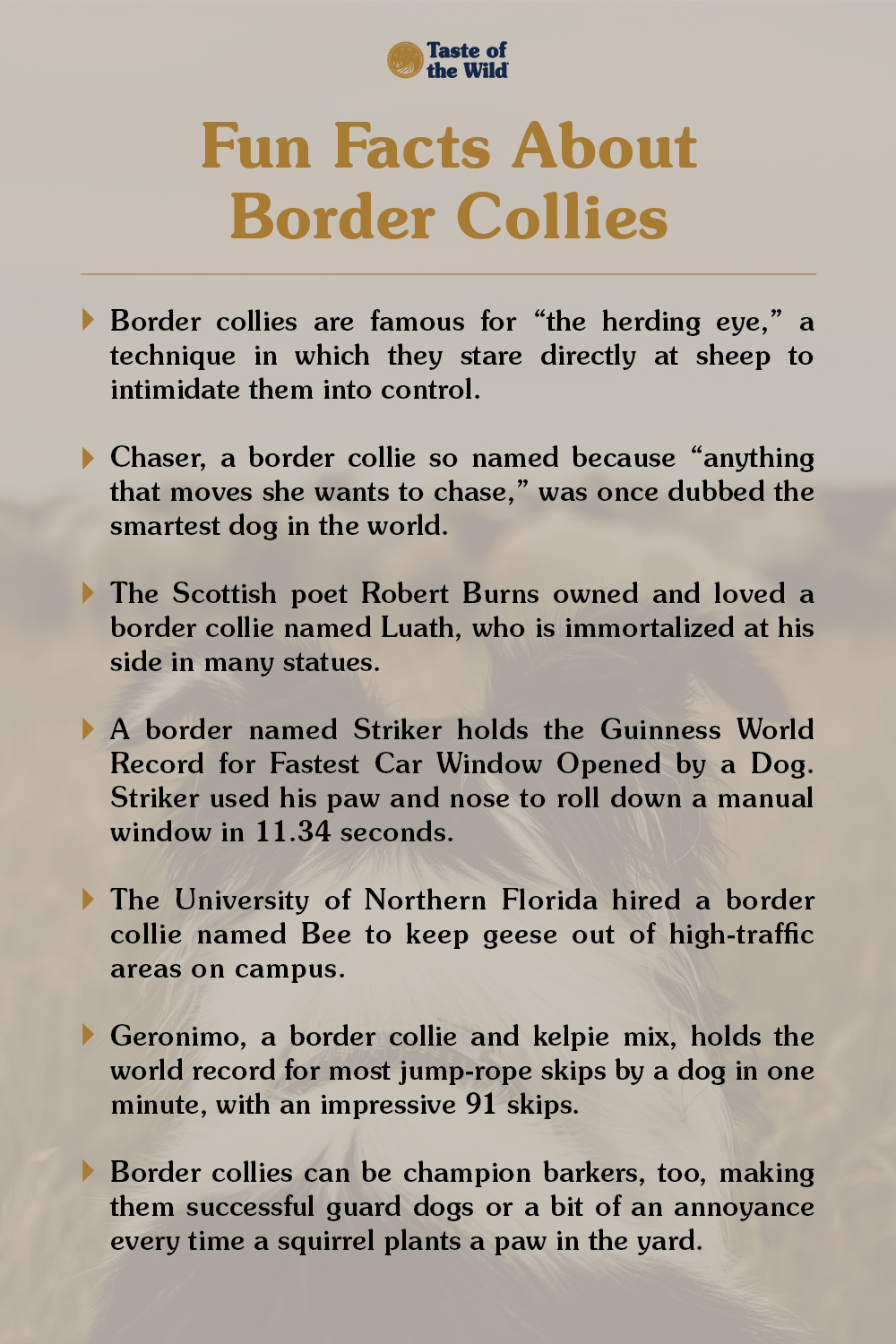 Fun Facts about Border Collies Infographic   Taste of the Wild