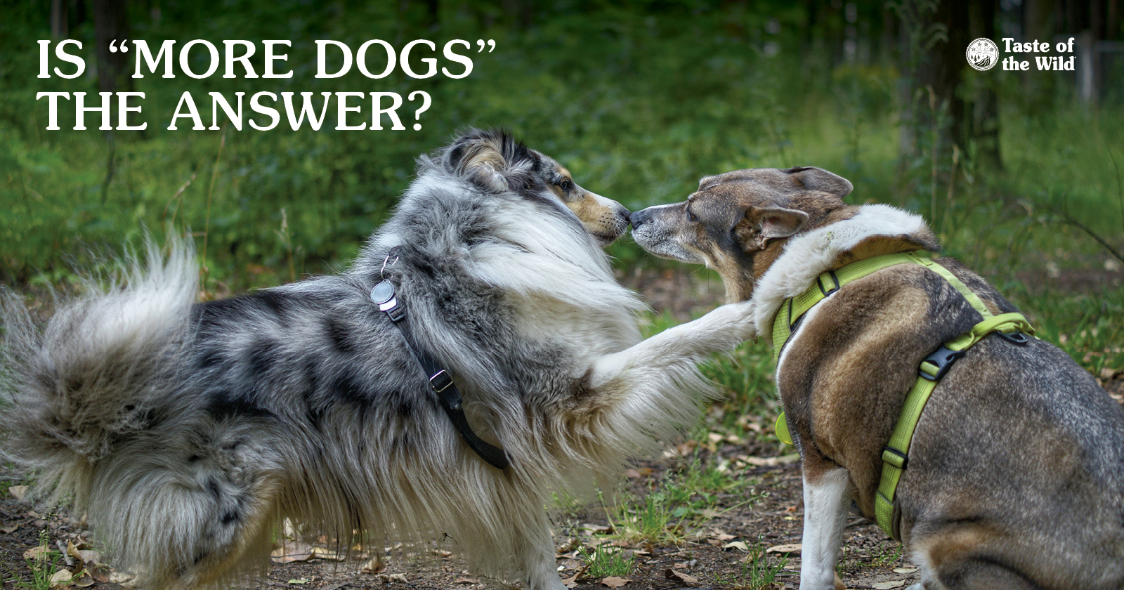 Two dogs interacting outside | Taste of the Wild