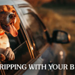 Dog Sticking Their Head Out of the Car Window | Taste of the Wild