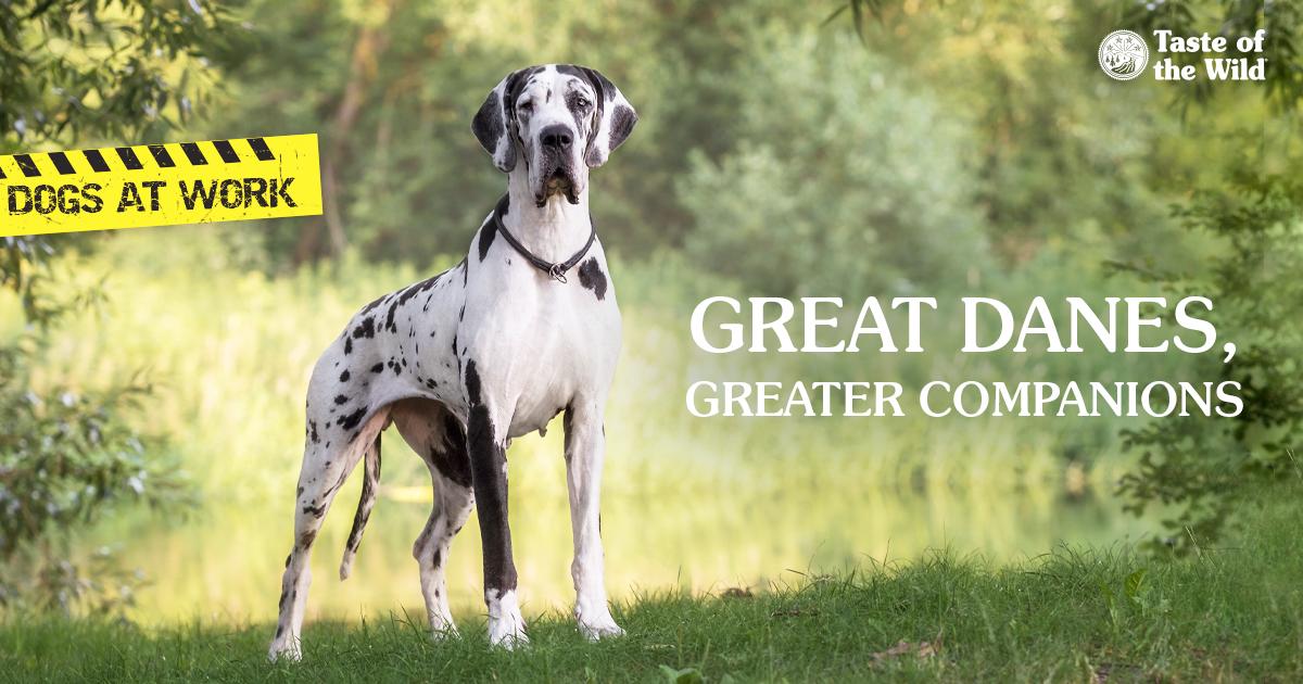 A Great Dane in a Field | Taste of the Wild