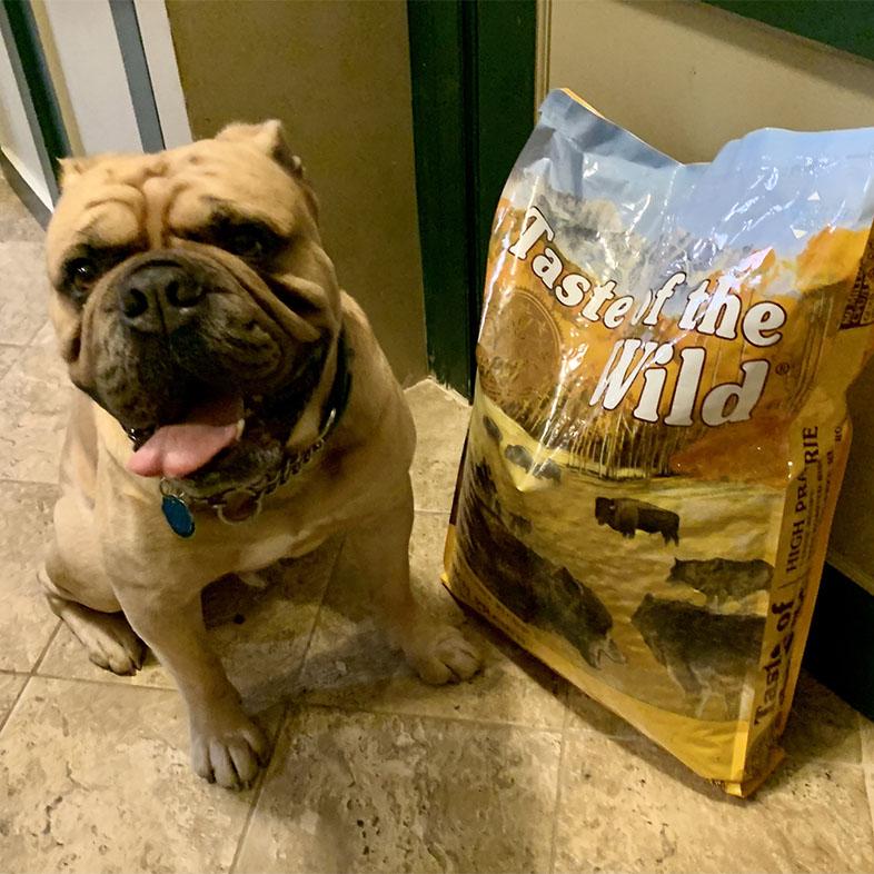 Old English Bulldog Sitting Next to Taste of the Wild Food Bag | Taste of the Wild